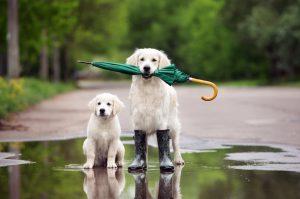 perros con paraguas