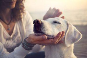 acariciando a perro blanco
